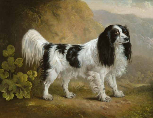 SAWREY GILPIN (1733-1807) Black & white springer spaniel Oil painting on canvas 63.5 x 76.2 cm / 25 x 30 in