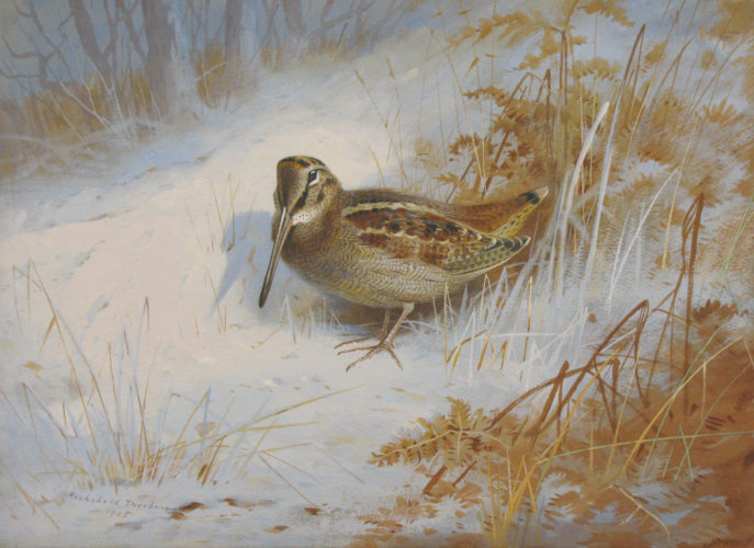 """ARCHIBALD THORBURN (British, 1860-1935) """"A woodcock in the snow"""" Signed and dated, lower left: Archibald Thorburn/1905 Watercolour and bodycolour on paper 11 x 15 in – 28 x 38.1 cm Provenance: Private collection, UK"""